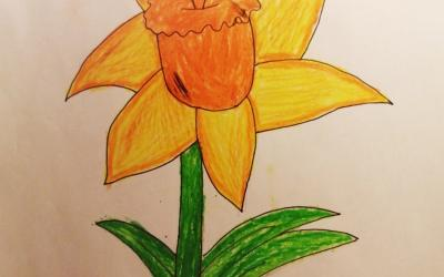 Drawing of a Daffoldil by Catrina in room 21