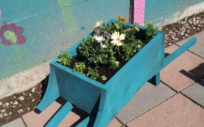 Wheelbarrow painted and planted by Josh (room 10)