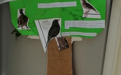 Rose (room 10) did a project on Irish Garden Birds