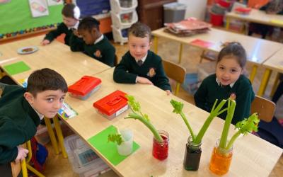These Junior Infants will be waiting until Monday to see the effect of food colouring on the celery ...