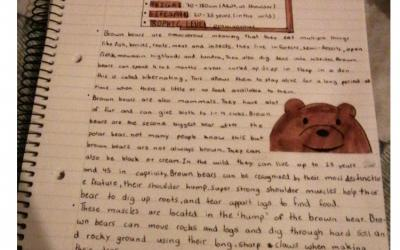 Luana from room 29 writes a report on bears