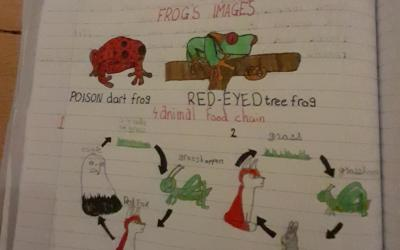 Síne from room 35 did this work on Food Chains